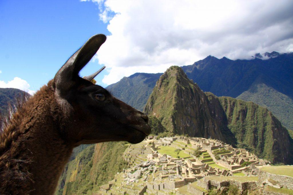 The classic lama pic :-)